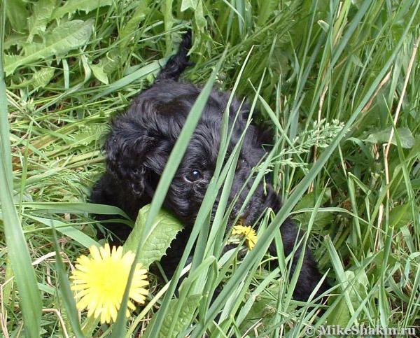 Лежит в траве