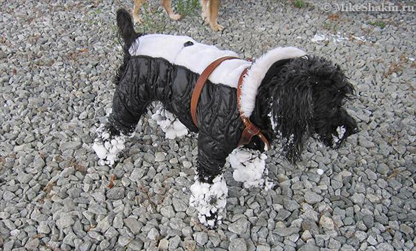 Посмотрите, как на лапки Бабая налип мокрый снег