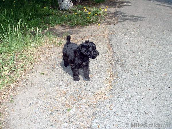 Первая прогулка Бабая