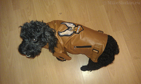 "кожаная куртка ""Harley Davidson"""