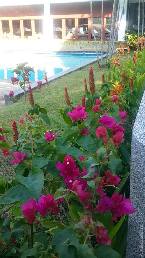 Все благоухает и цветет